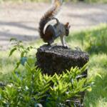 Squirrel Pic-Sized for Blog Post